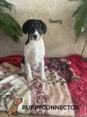 Searg